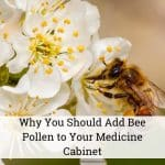 Why You Should Add Bee Pollen to Your Medicine Cabinet