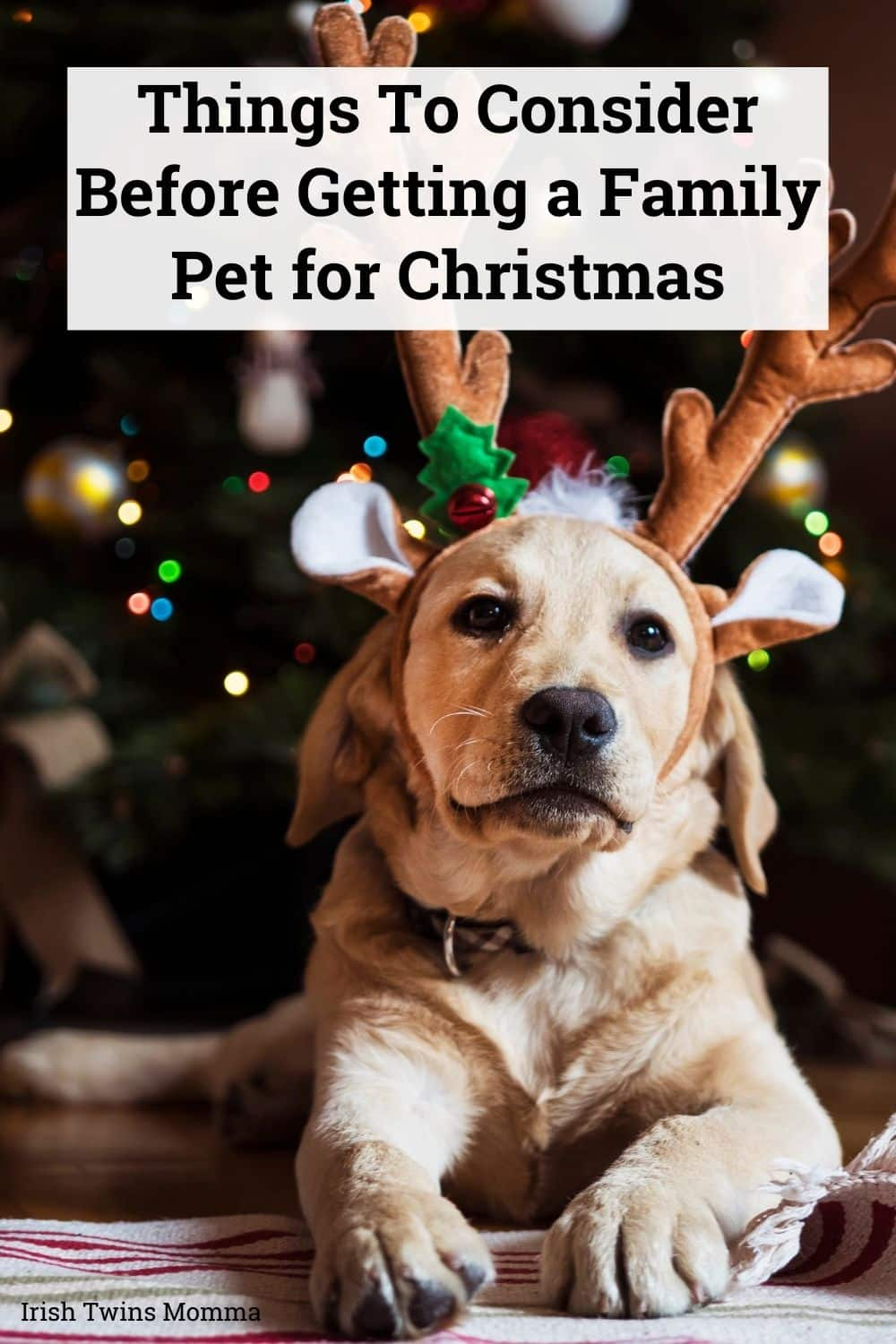 Things To Consider Before Getting a Family Pet for Christmas (1)