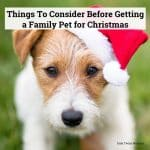 Things To Consider Before Getting a Family Pet for Christmas